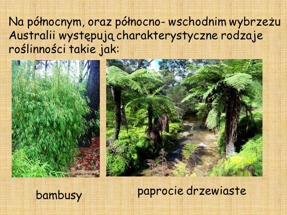 Na północnym, oraz północno- wschodnim wybrzeżu Australii występują charakterystyczne rodzaje roślinności takie jak: