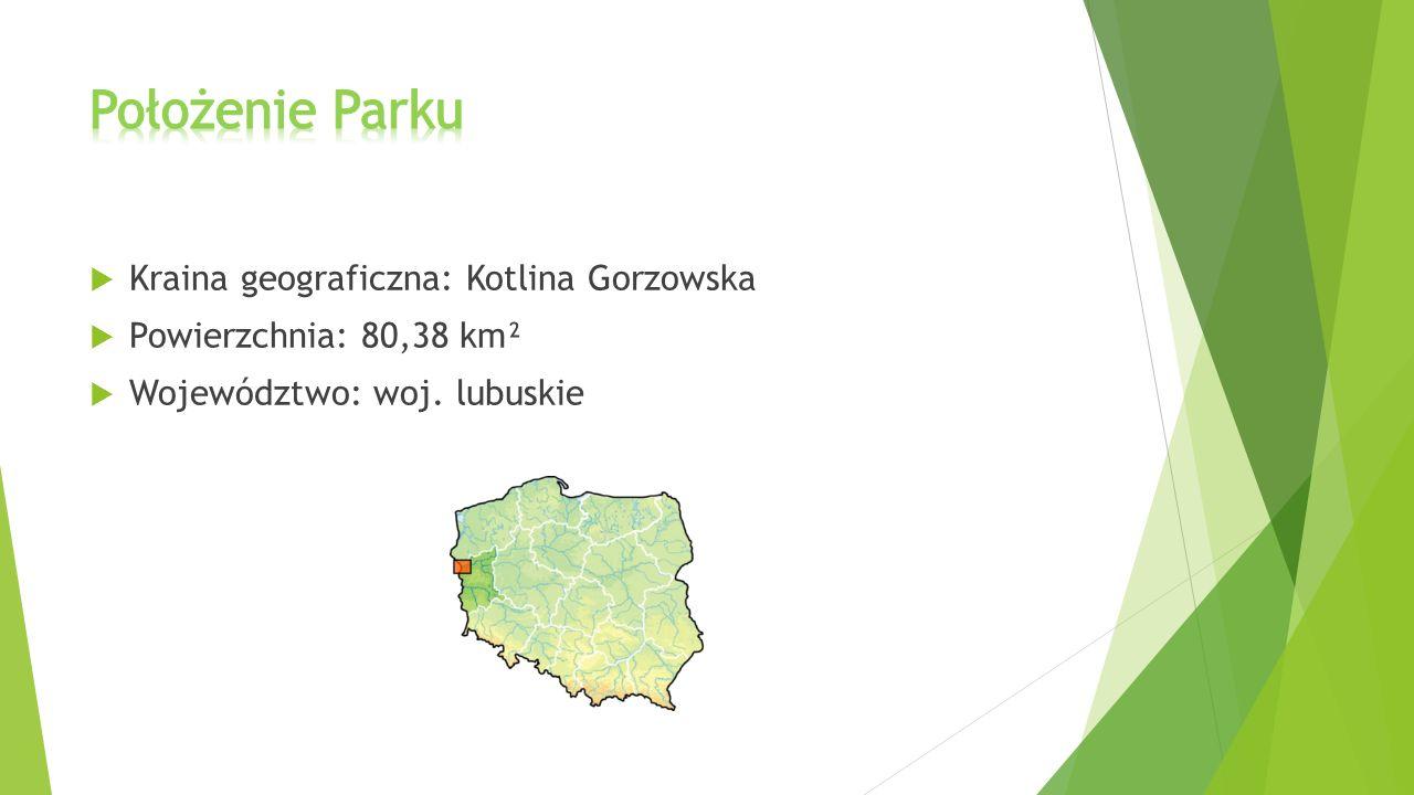 Położenie Parku Kraina geograficzna: Kotlina Gorzowska