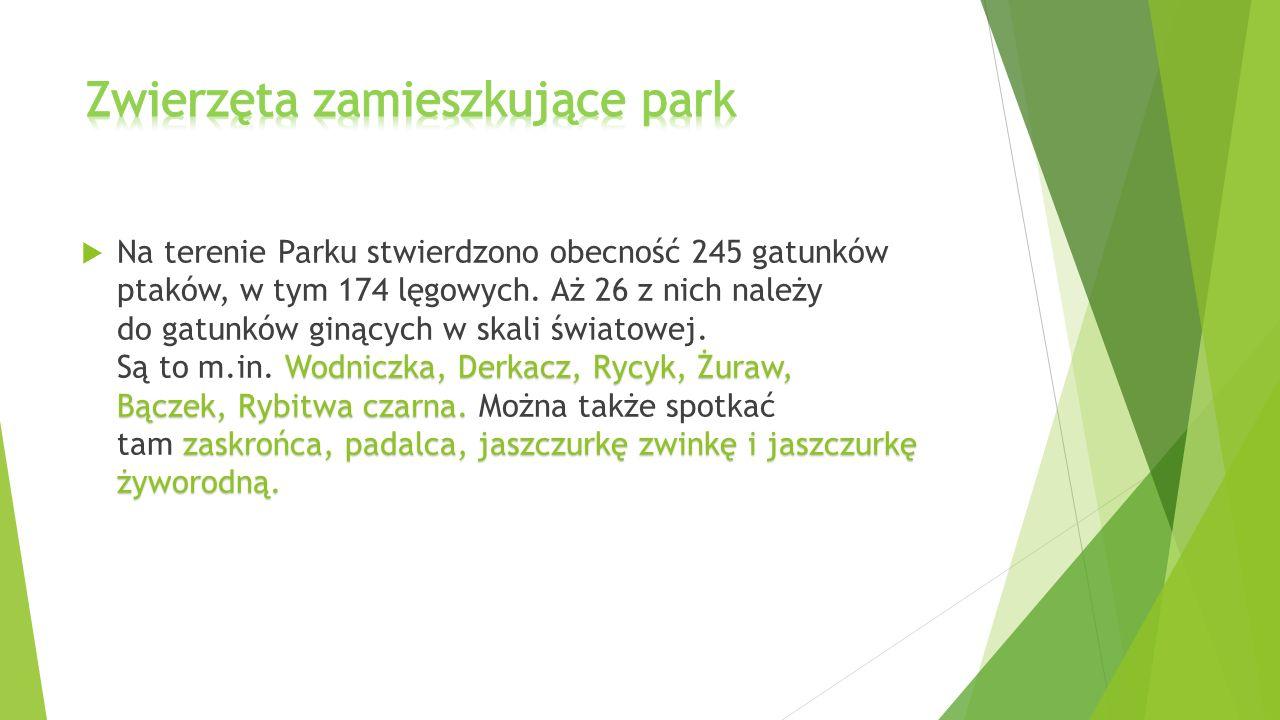 Zwierzęta zamieszkujące park