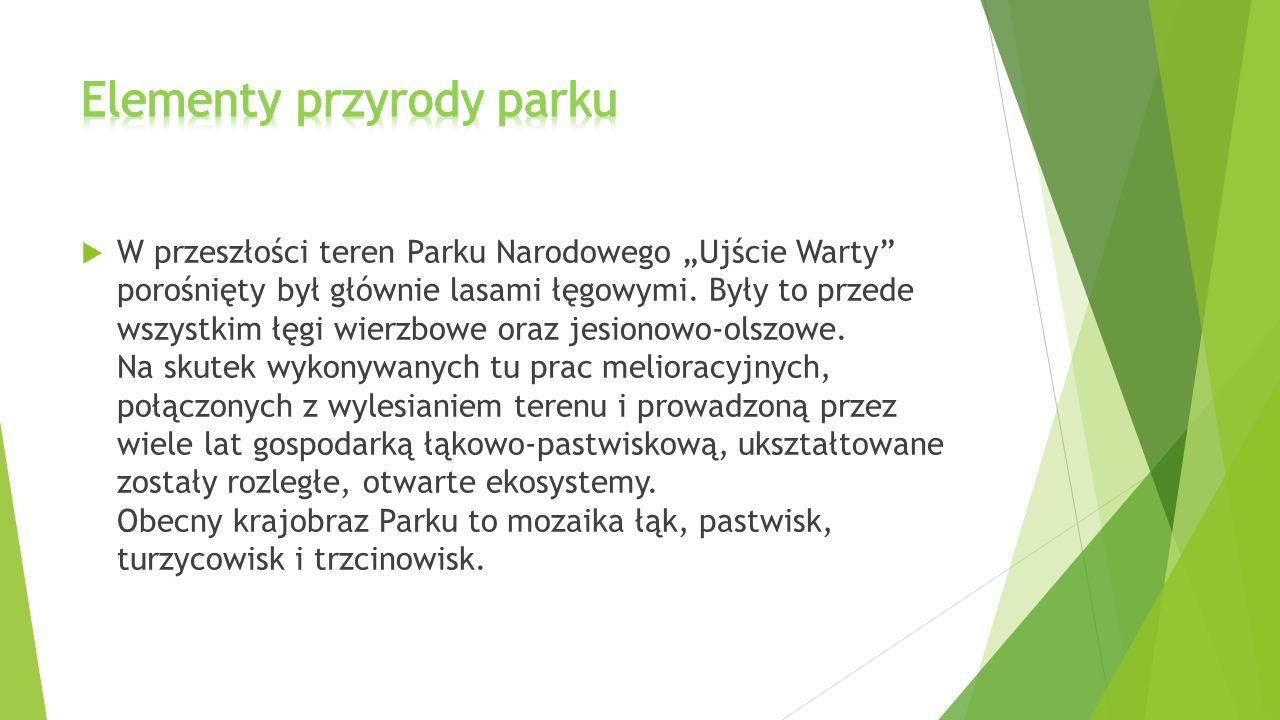 Elementy przyrody parku