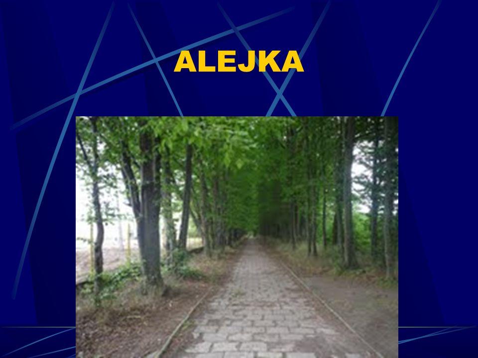 ALEJKA 15