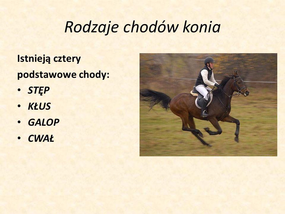Rodzaje chodów konia Istnieją cztery podstawowe chody: STĘP KŁUS GALOP