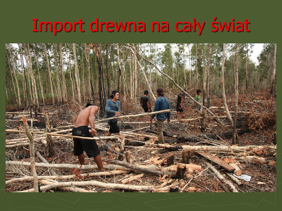 Import drewna na cały świat