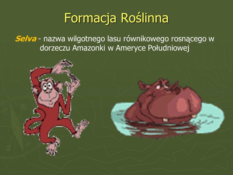 Formacja Roślinna Selva - nazwa wilgotnego lasu równikowego rosnącego w dorzeczu Amazonki w Ameryce Południowej.