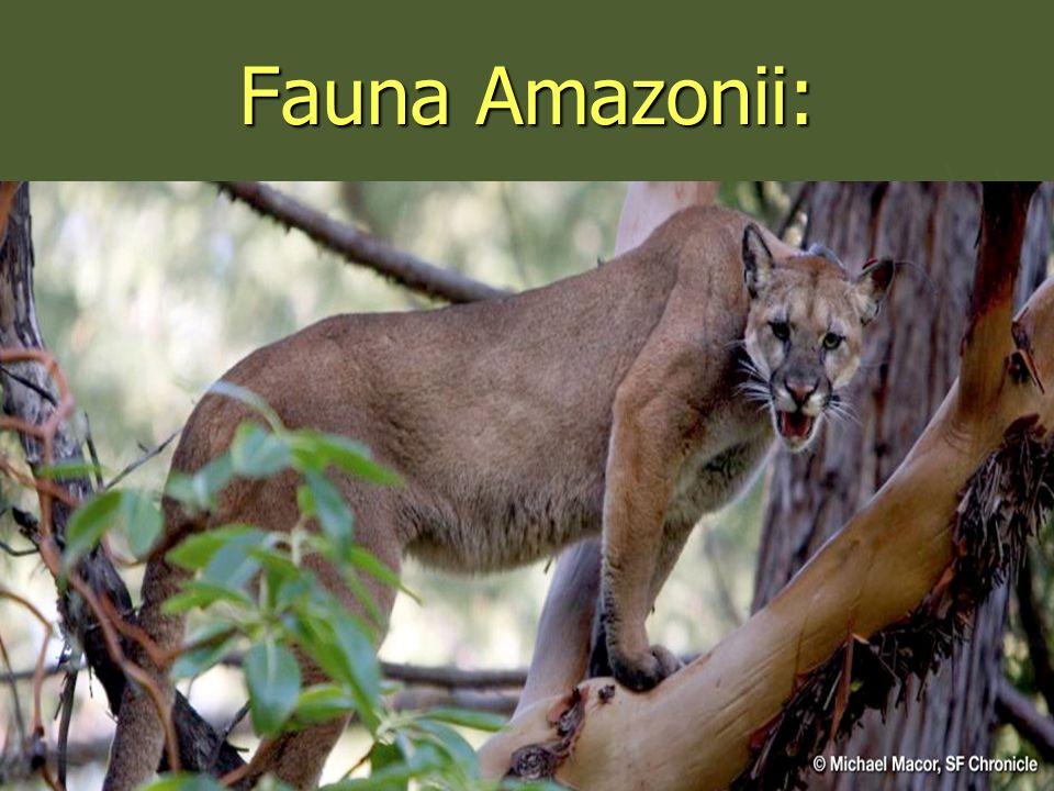 Fauna Amazonii: