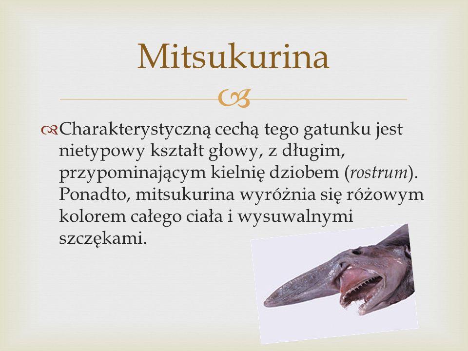Mitsukurina