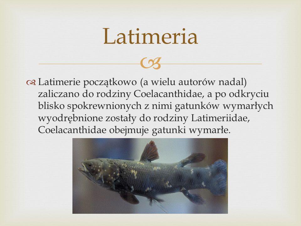 Latimeria