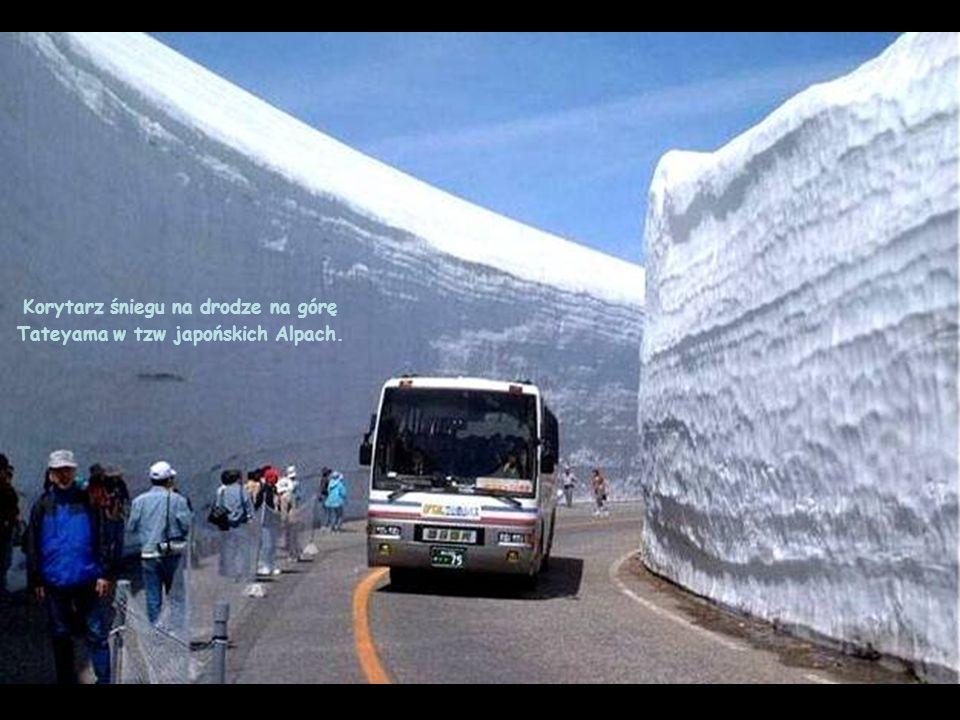 Korytarz śniegu na drodze na górę Tateyama w tzw japońskich Alpach.