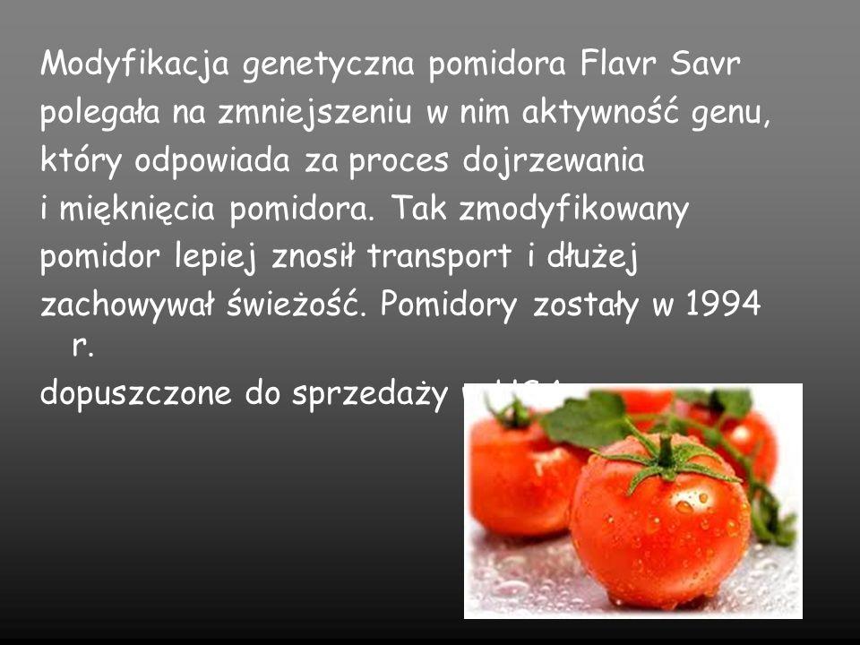 Modyfikacja genetyczna pomidora Flavr Savr