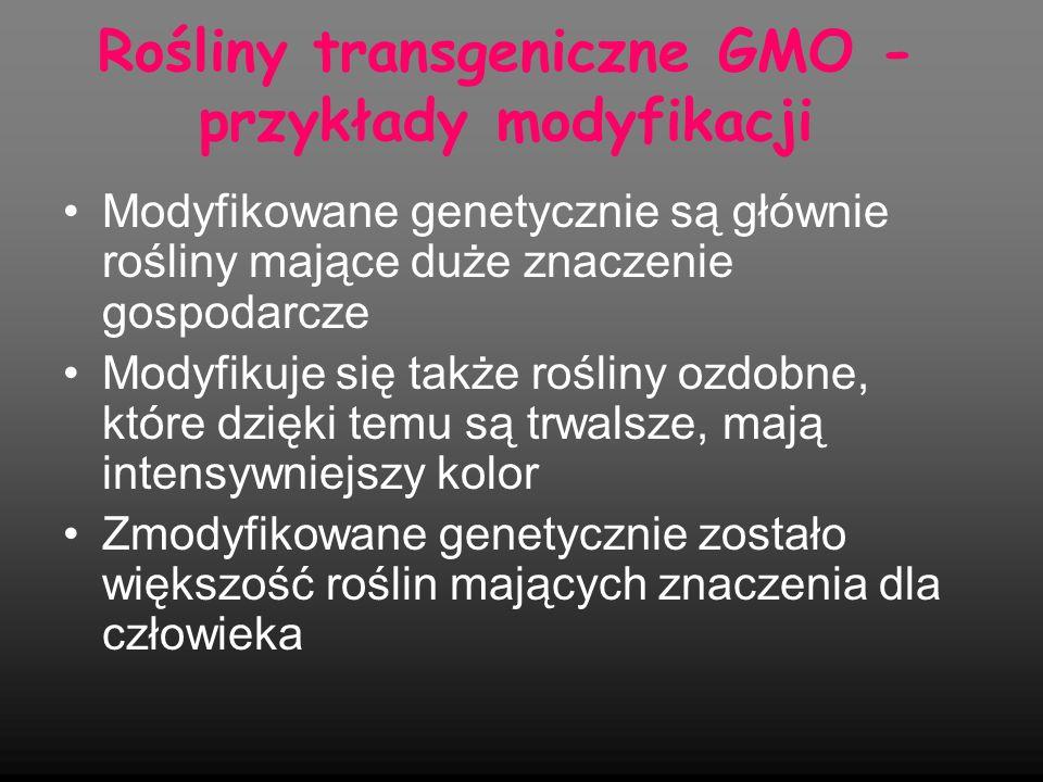 Rośliny transgeniczne GMO - przykłady modyfikacji