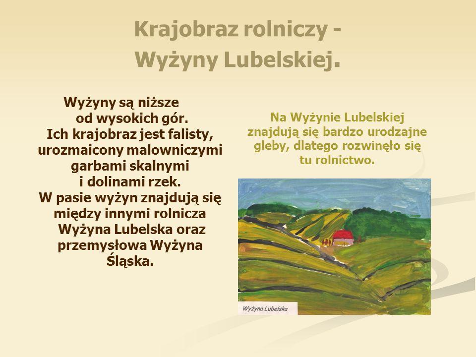 Krajobraz rolniczy - Wyżyny Lubelskiej.