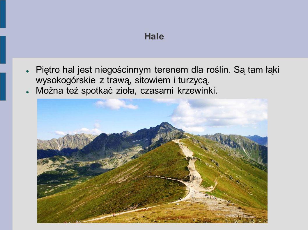 Hale Piętro hal jest niegościnnym terenem dla roślin. Są tam łąki wysokogórskie z trawą, sitowiem i turzycą.