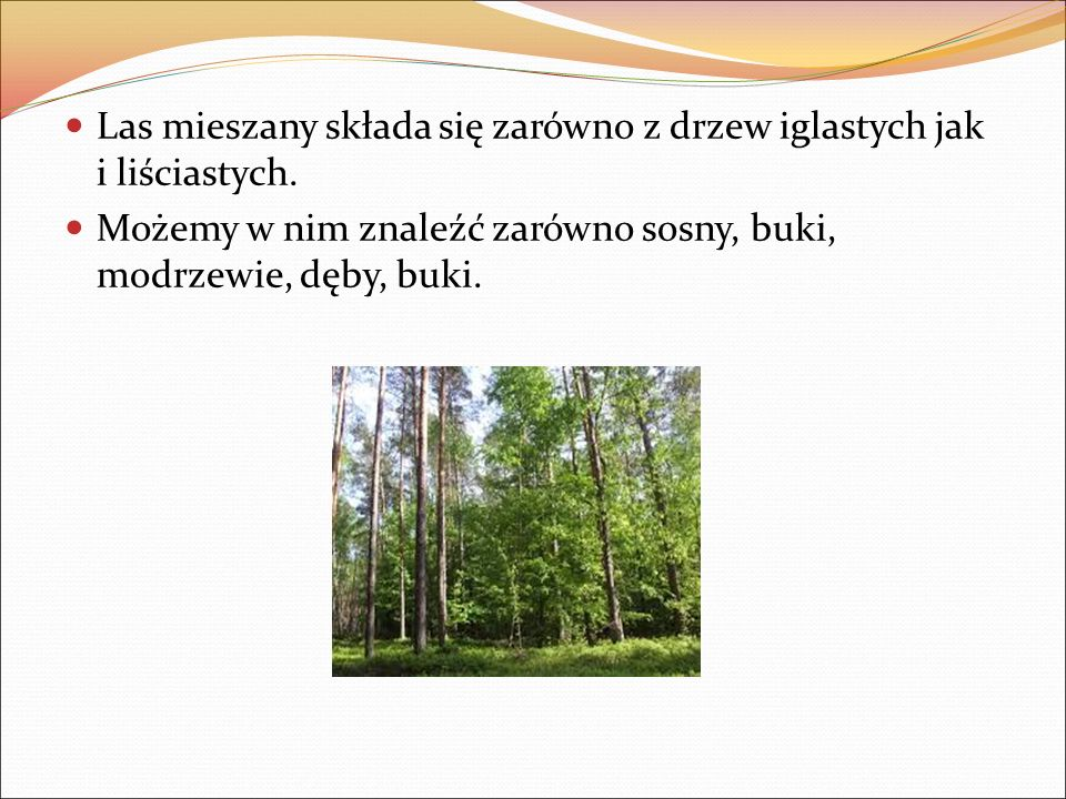 Las mieszany składa się zarówno z drzew iglastych jak i liściastych.