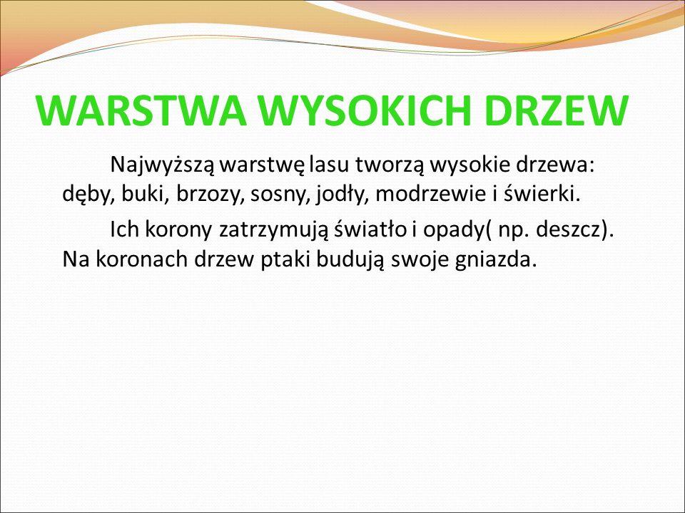 WARSTWA WYSOKICH DRZEW