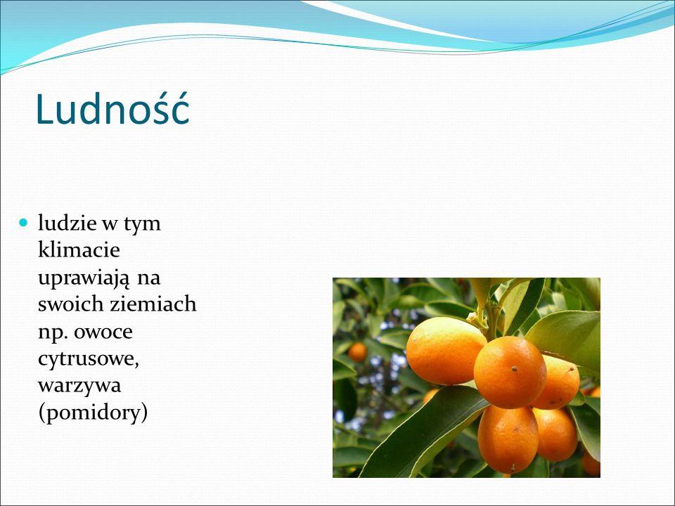 Ludność ludzie w tym klimacie uprawiają na swoich ziemiach np. owoce cytrusowe, warzywa (pomidory)