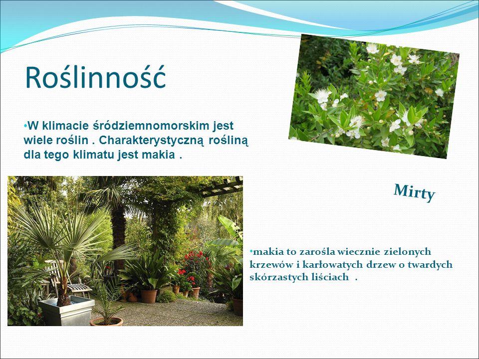 Roślinność W klimacie śródziemnomorskim jest wiele roślin . Charakterystyczną rośliną dla tego klimatu jest makia .