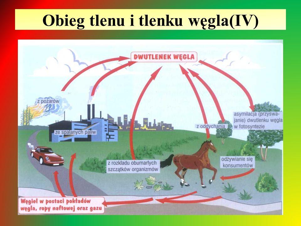 Obieg tlenu i tlenku węgla(IV)