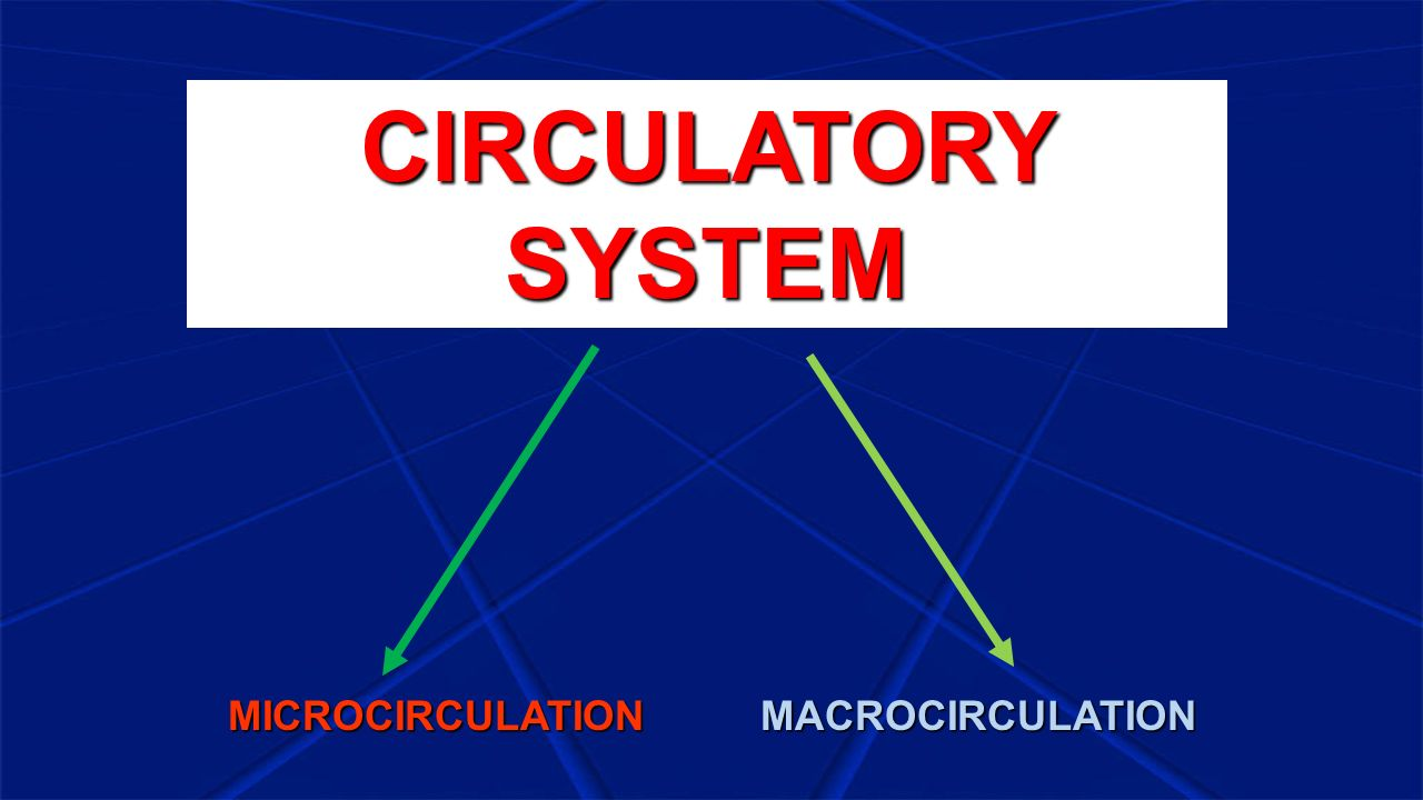 CIRCULATORY SYSTEM MICROCIRCULATION MACROCIRCULATION