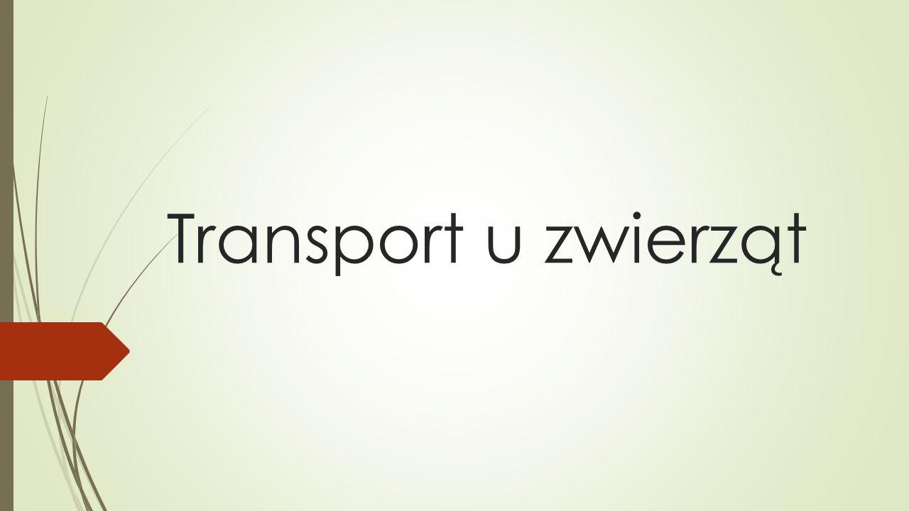 Transport u zwierząt