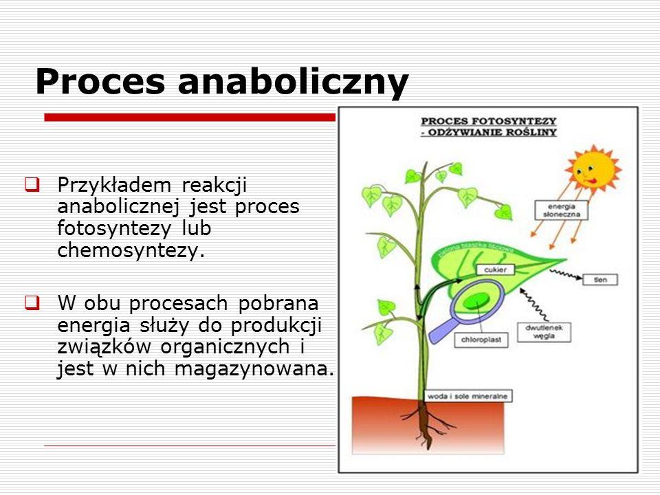Proces anaboliczny Przykładem reakcji anabolicznej jest proces fotosyntezy lub chemosyntezy.