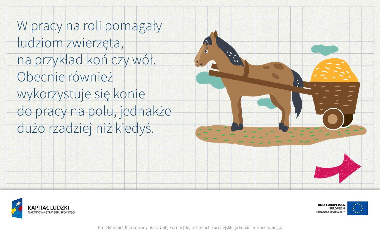 W pracy na roli pomagały ludziom zwierzęta, na przykład koń czy wół.
