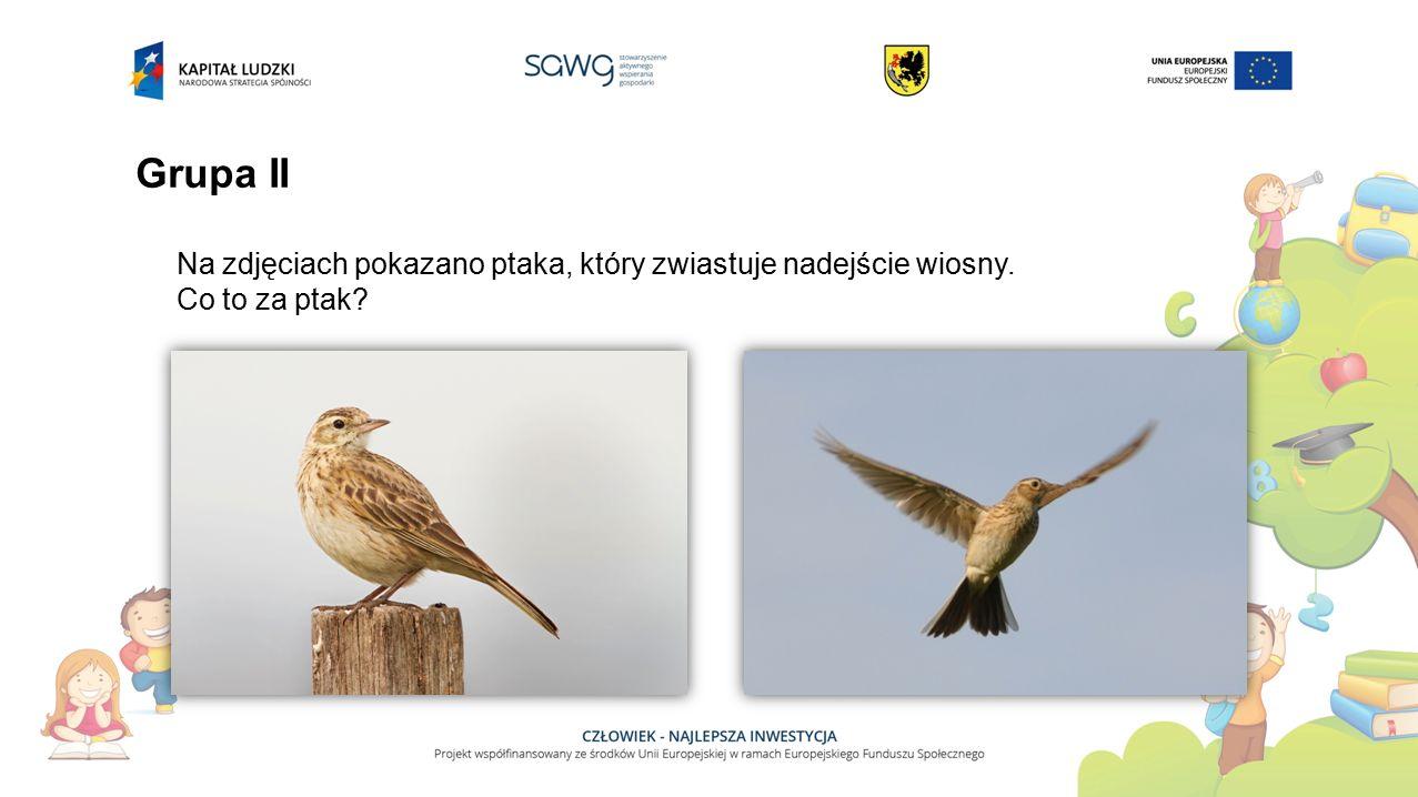 Grupa II Na zdjęciach pokazano ptaka, który zwiastuje nadejście wiosny. Co to za ptak