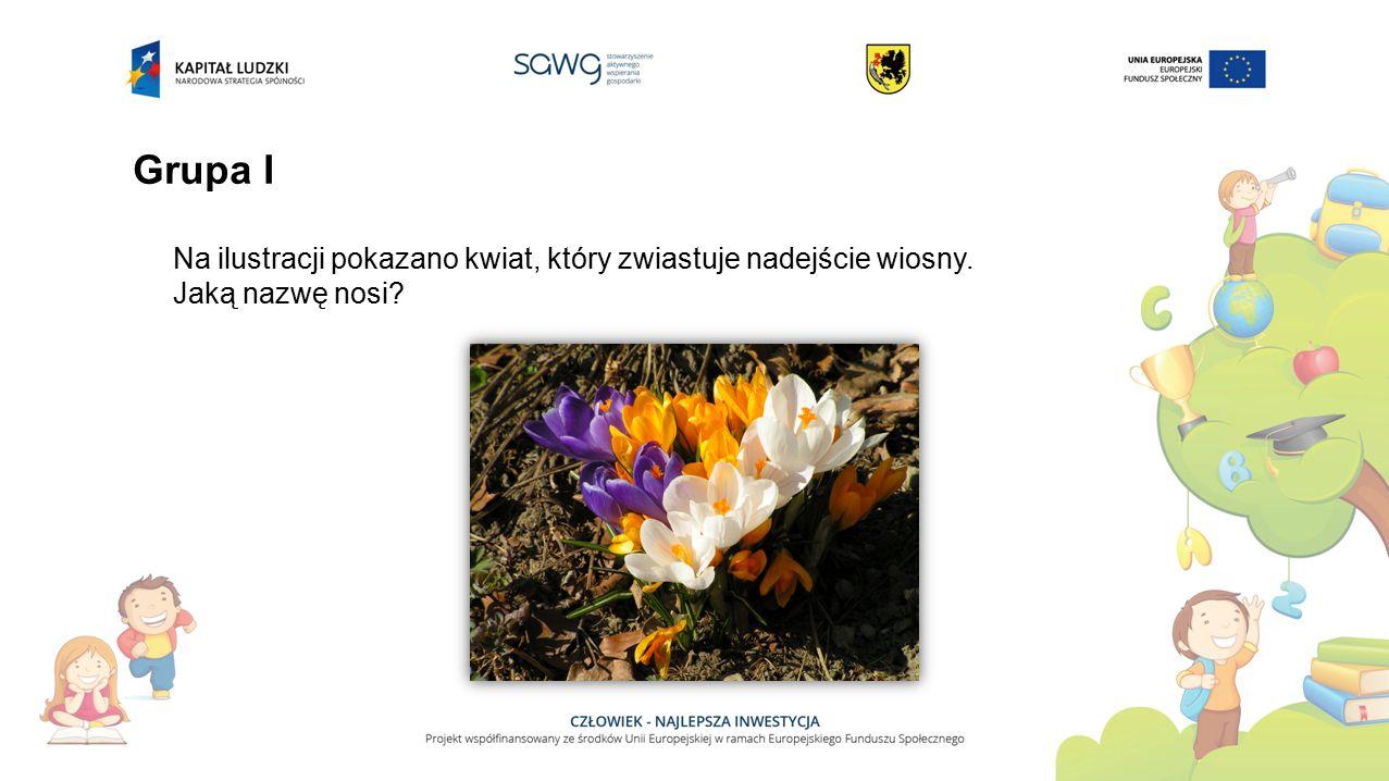 Grupa I Na ilustracji pokazano kwiat, który zwiastuje nadejście wiosny. Jaką nazwę nosi