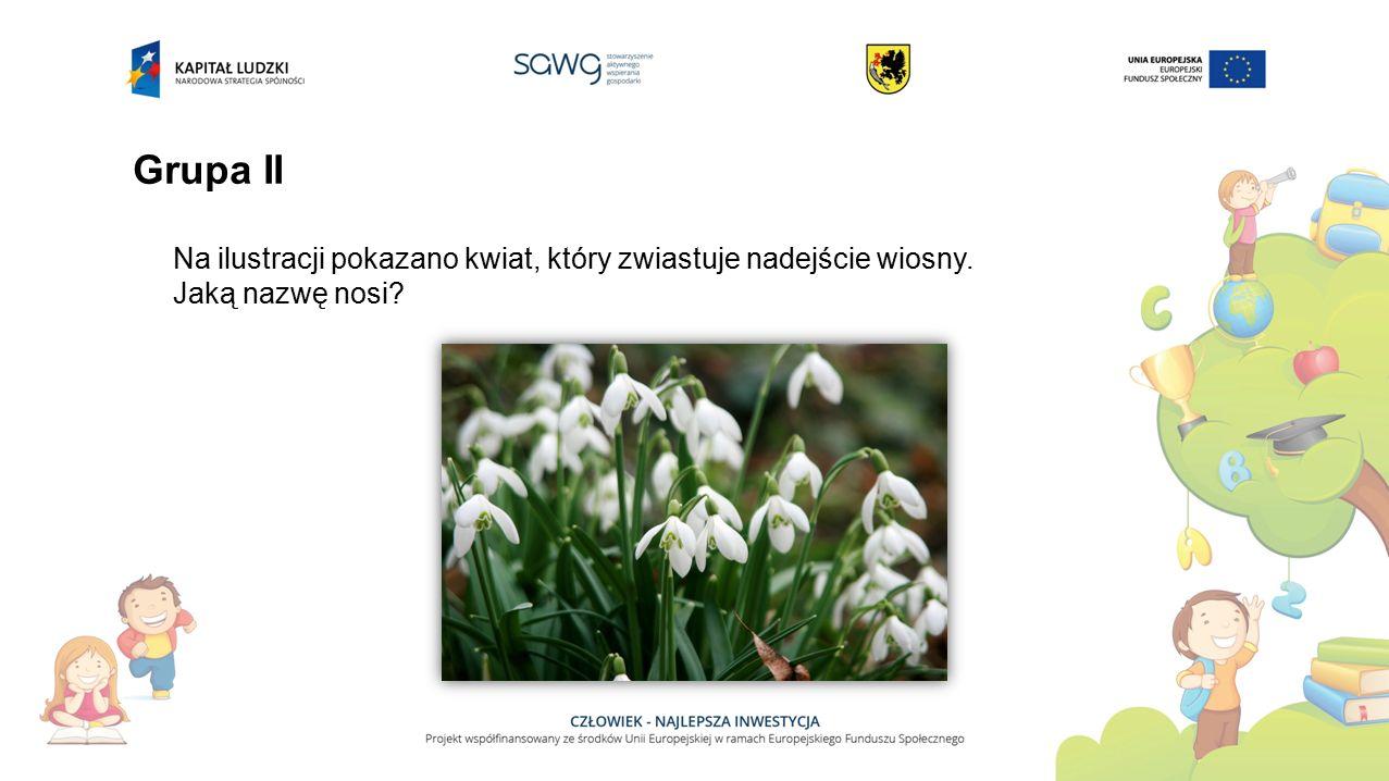 Grupa II Na ilustracji pokazano kwiat, który zwiastuje nadejście wiosny. Jaką nazwę nosi