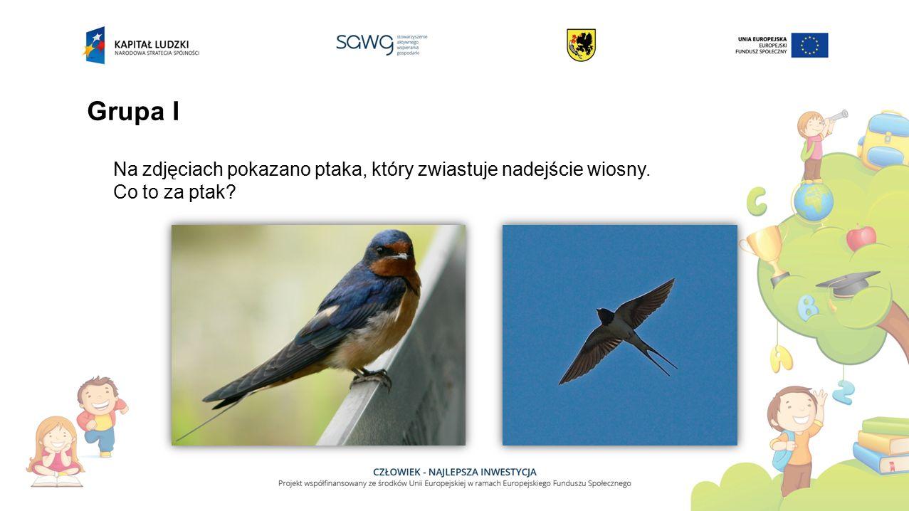 Grupa I Na zdjęciach pokazano ptaka, który zwiastuje nadejście wiosny.