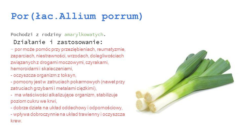 Por(łac.Allium porrum)
