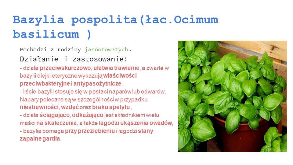Bazylia pospolita(łac.Ocimum basilicum )