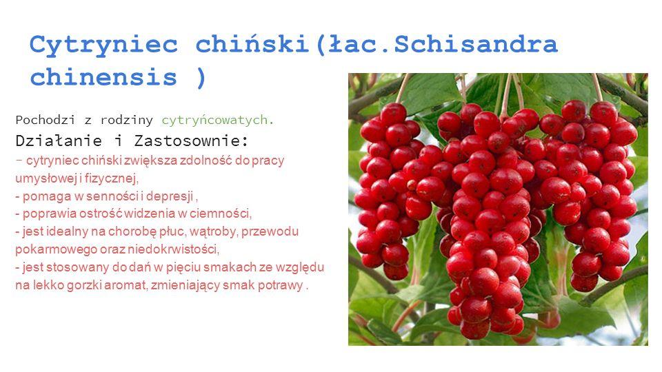 Cytryniec chiński(łac.Schisandra chinensis )