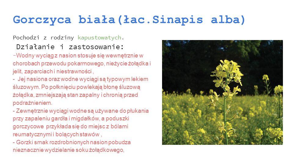 Gorczyca biała(łac.Sinapis alba)