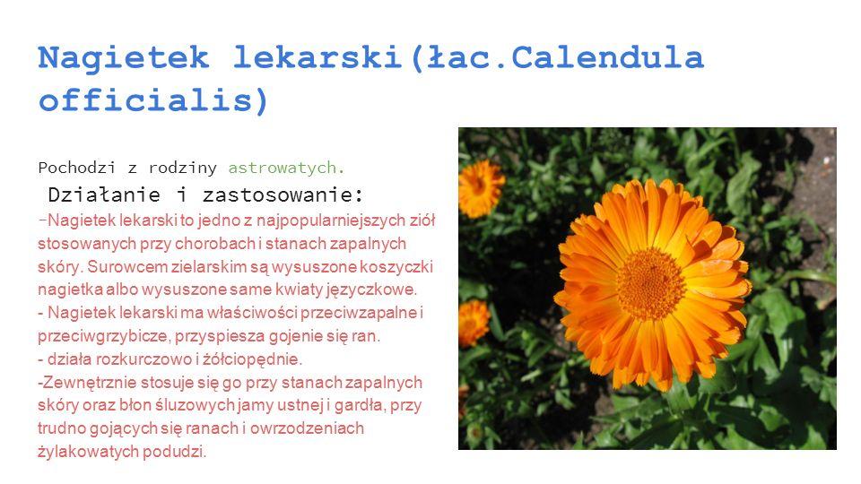Nagietek lekarski(łac.Calendula officialis)