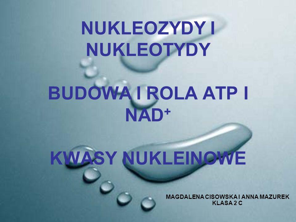 NUKLEOZYDY I NUKLEOTYDY BUDOWA I ROLA ATP I NAD+ KWASY NUKLEINOWE