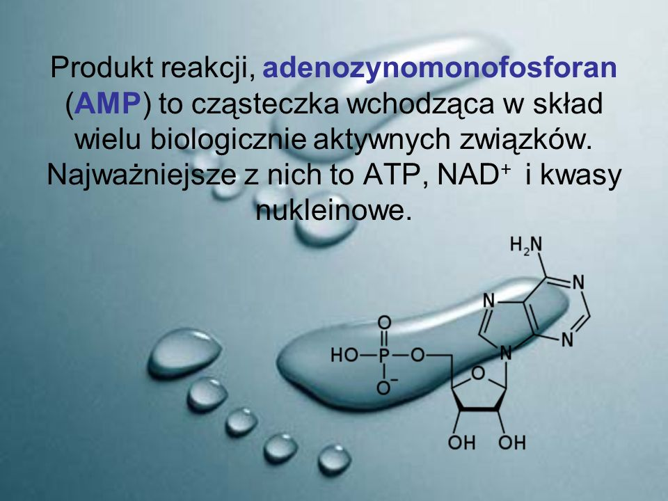 Produkt reakcji, adenozynomonofosforan (AMP) to cząsteczka wchodząca w skład wielu biologicznie aktywnych związków.