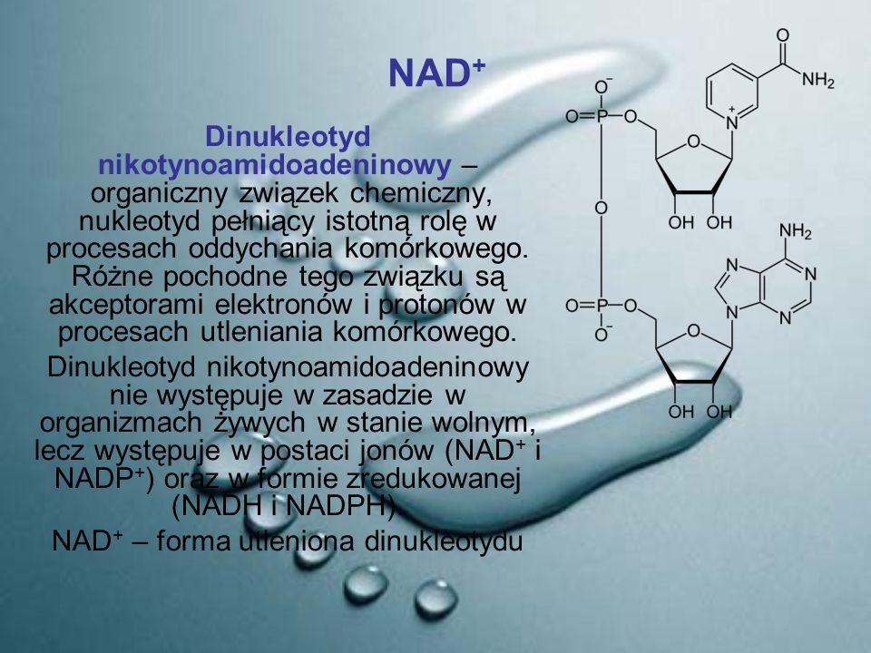 NAD+ – forma utleniona dinukleotydu