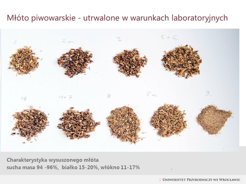 Młóto piwowarskie - utrwalone w warunkach laboratoryjnych