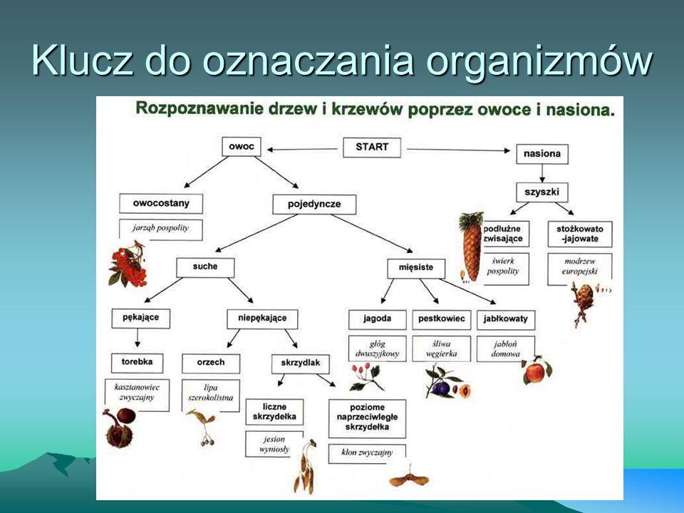 Klucz do oznaczania organizmów