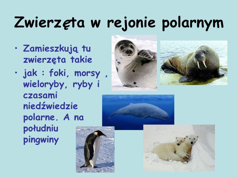 Zwierzęta w rejonie polarnym