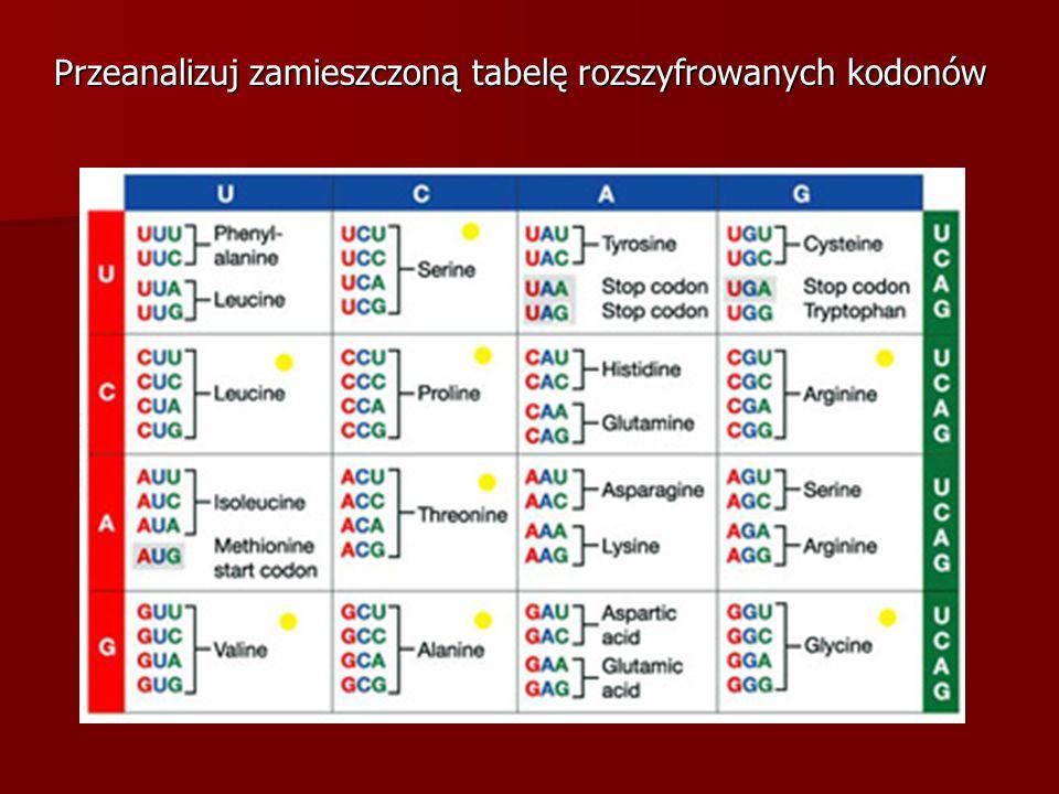 Przeanalizuj zamieszczoną tabelę rozszyfrowanych kodonów