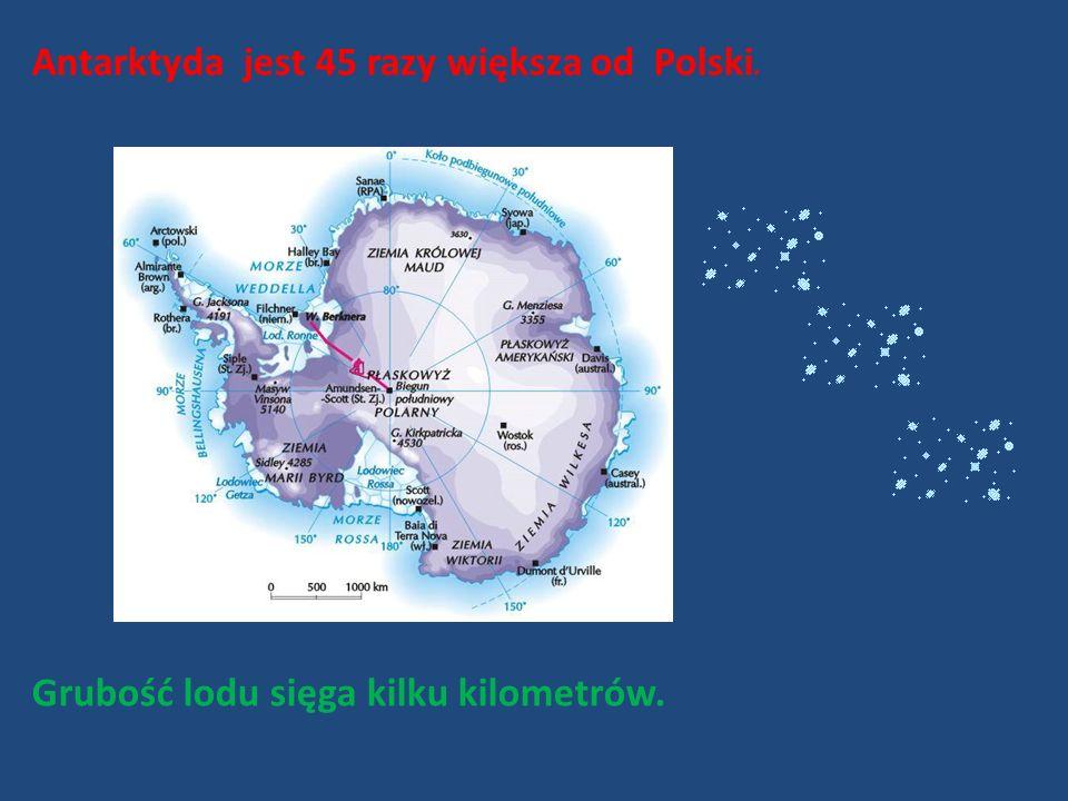Antarktyda jest 45 razy większa od Polski.