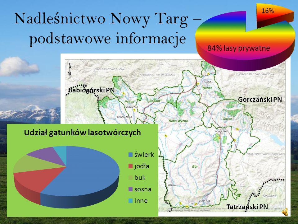 Nadleśnictwo Nowy Targ – podstawowe informacje