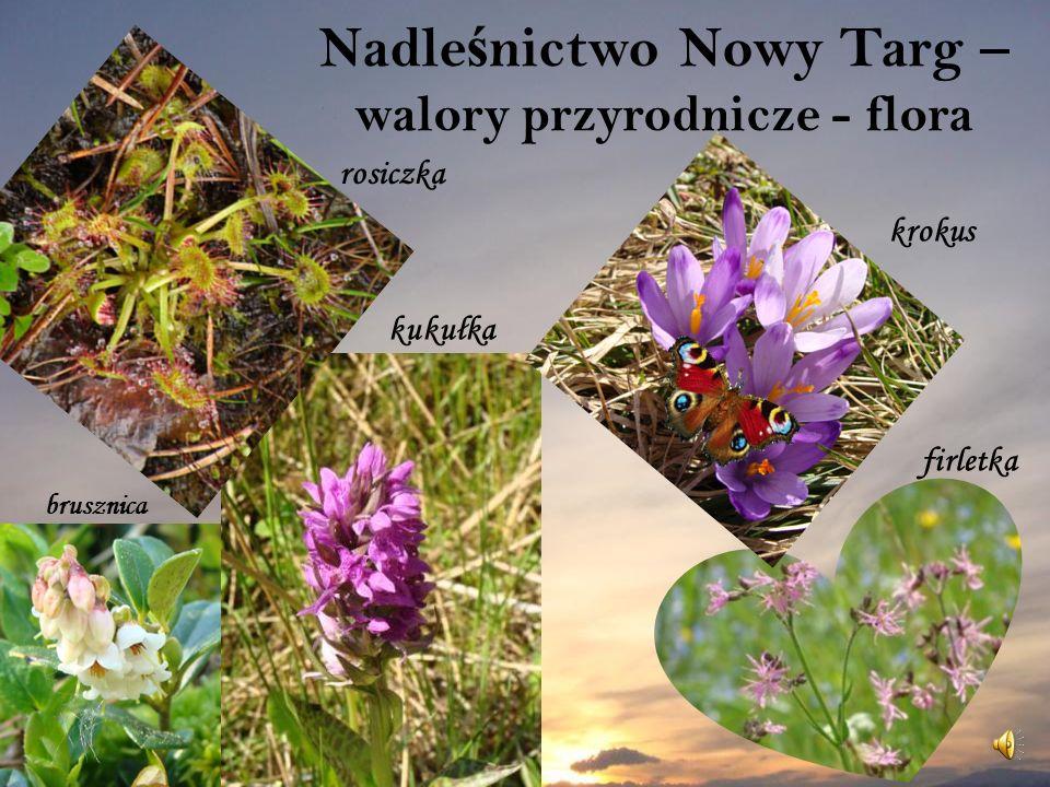 Nadleśnictwo Nowy Targ – walory przyrodnicze - flora
