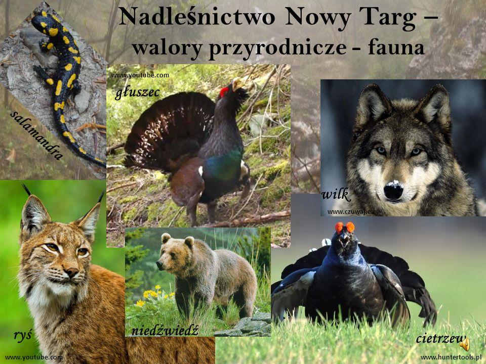 Nadleśnictwo Nowy Targ – walory przyrodnicze - fauna