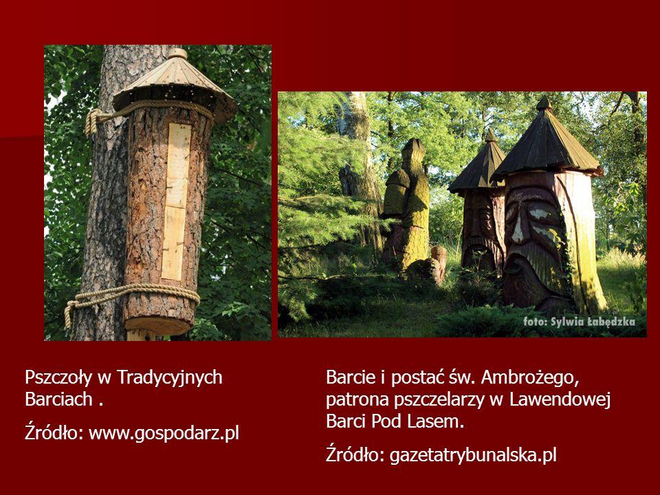 Pszczoły w Tradycyjnych Barciach .