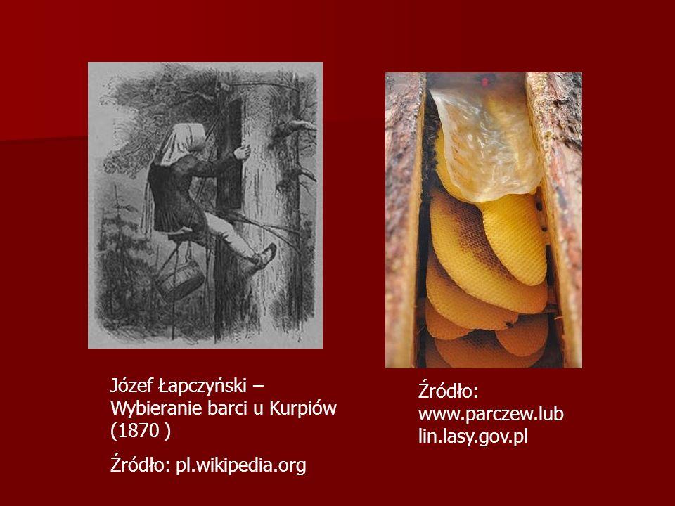 Józef Łapczyński – Wybieranie barci u Kurpiów (1870 )