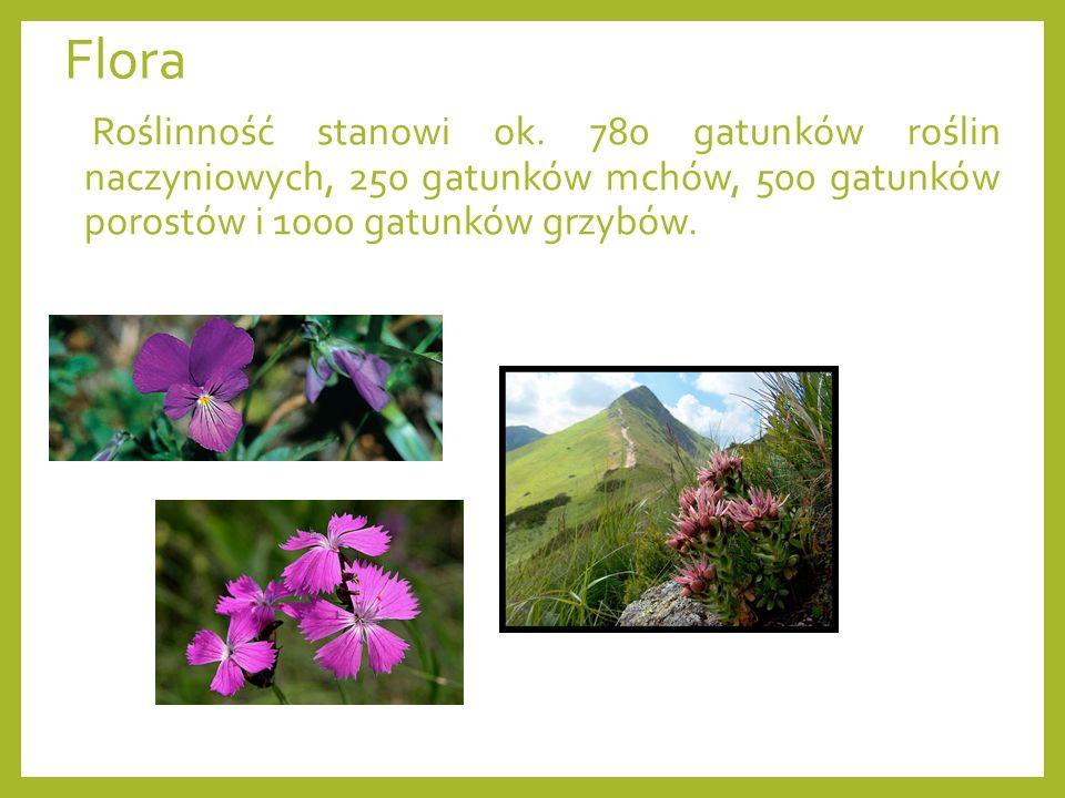 Flora Roślinność stanowi ok.