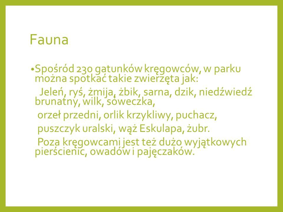 Fauna Spośród 230 gatunków kręgowców, w parku można spotkać takie zwierzęta jak: