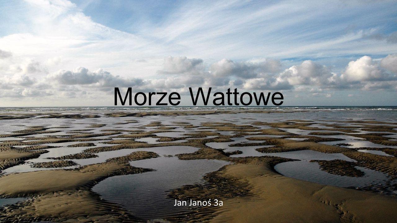 Morze Wattowe Jan Janoś 3a